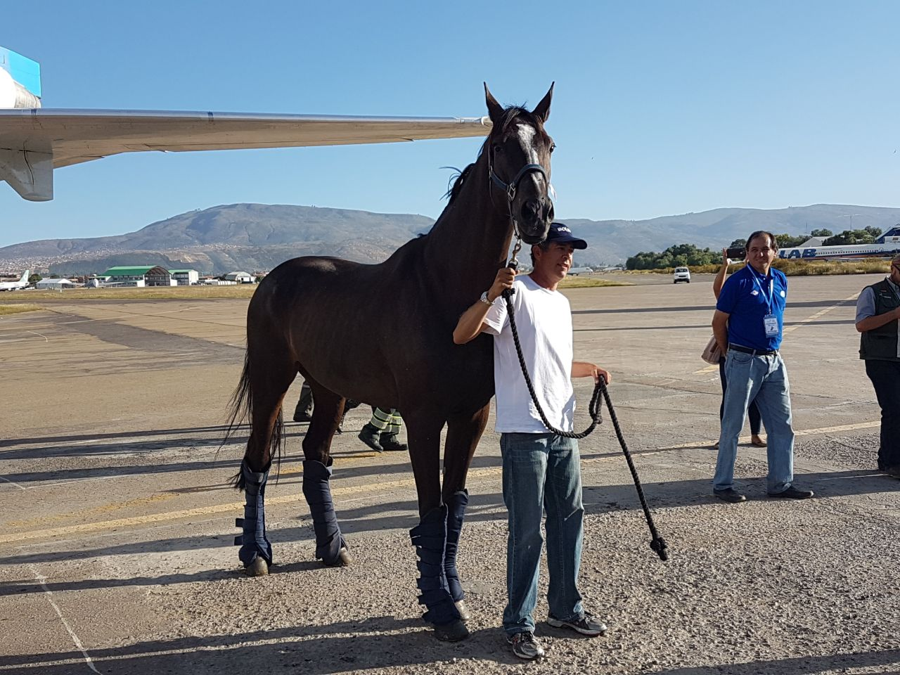 Arriban el primer Jinete y Caballo a Cochabamba